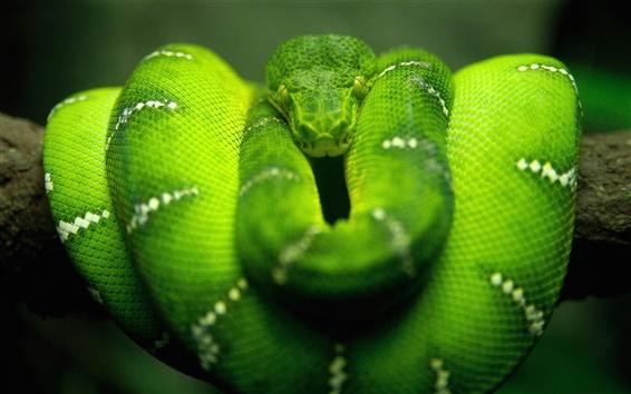 배경 화면 그린 뱀