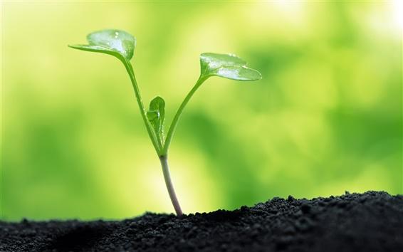Обои Зеленый росток макросов