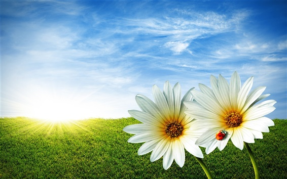 Papéis de Parede Ladybug daisy céu