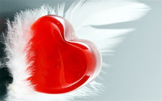 Wallpaper Love feather