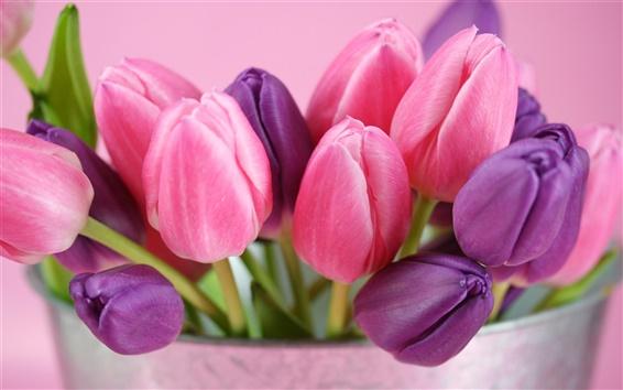 Fond d'écran Rose et violet fleurs tulipes