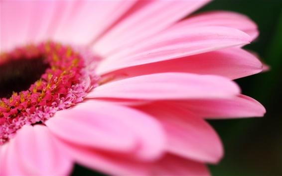 Papéis de Parede Flor rosa macro