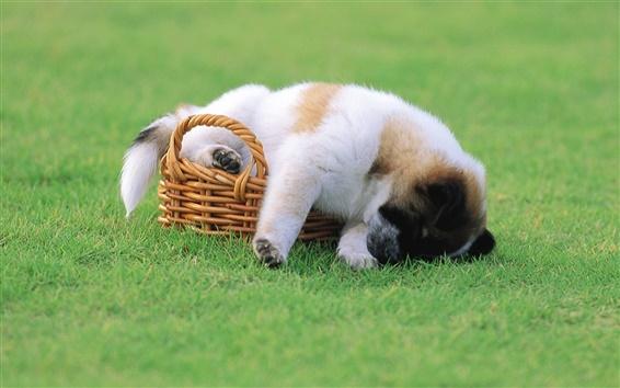 Wallpaper Puppy basket grass