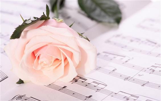 Fond d'écran notes de Rose