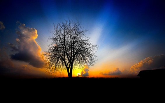 Wallpaper Tree silhouette sunset glow