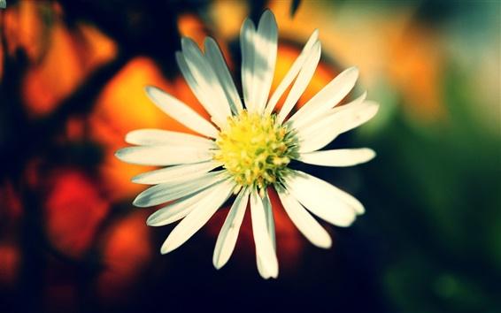 Papéis de Parede Flor cores quentes