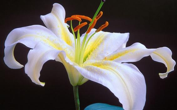 Fond d'écran Fleur blanche sur fond noir