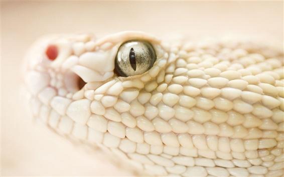 Обои Белая змея