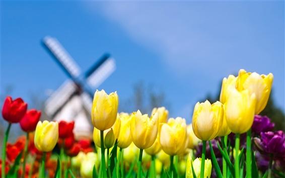 Wallpaper Yellow tulips