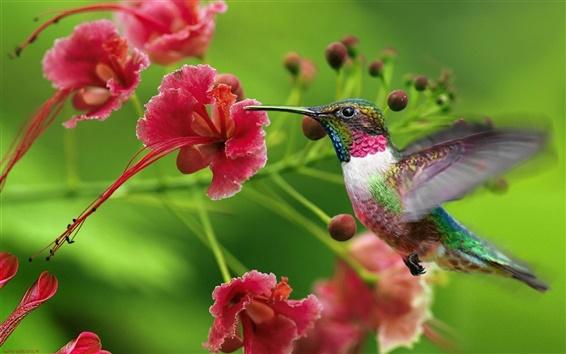 Papéis de Parede Beija-flor flores voando