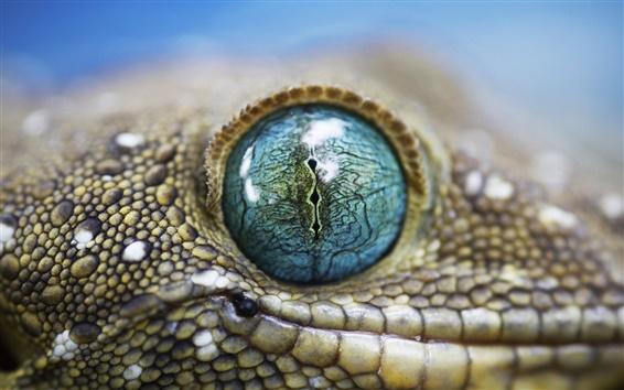 Обои Аллигатор глаз