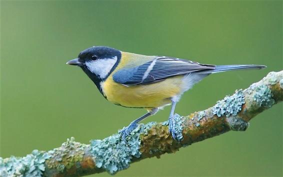 壁紙 枝上の鳥