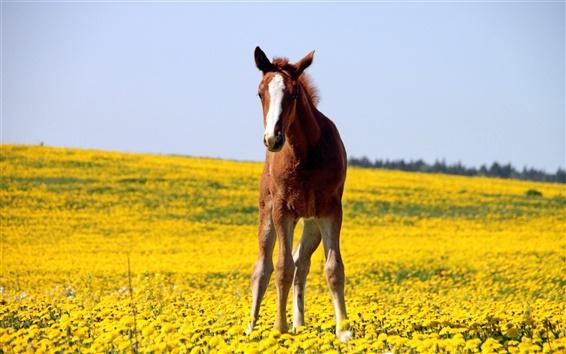 Wallpaper Brown horse