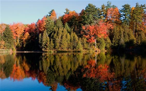 Обои Зеркало воды древесины