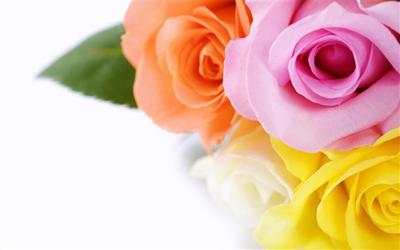 Обои роз букет