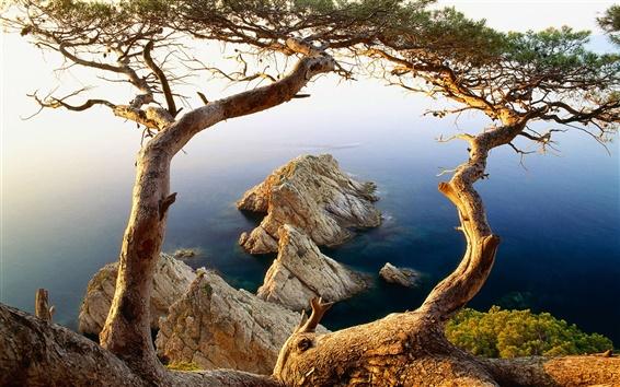 Обои Дерево и скалы побережья