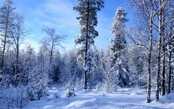 Wallpaper Winter forest snow much