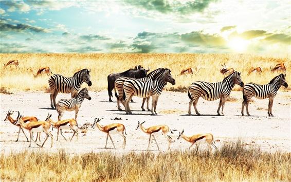 Wallpaper Zebra and deer