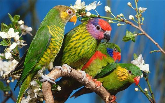 Papéis de Parede Quatro papagaios verdes