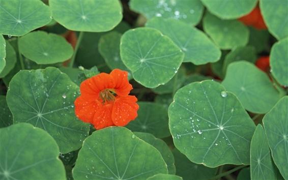 배경 화면 붉은 꽃의 신록