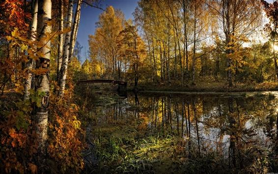 배경 화면 공원 하천 교량 자연의 아름다움