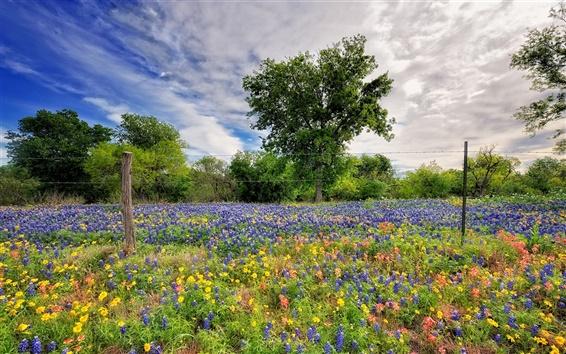 Wallpaper Spring wildflowers