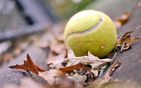 배경 화면 테니스 공이 가을 분위기를 잎