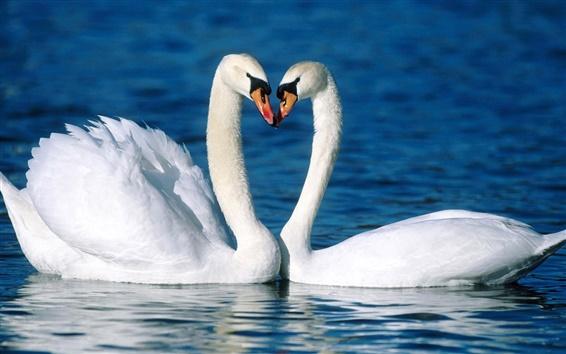 Papéis de Parede Dois cisnes brancos na água