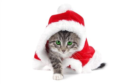Wallpaper Christmas cat green eyes