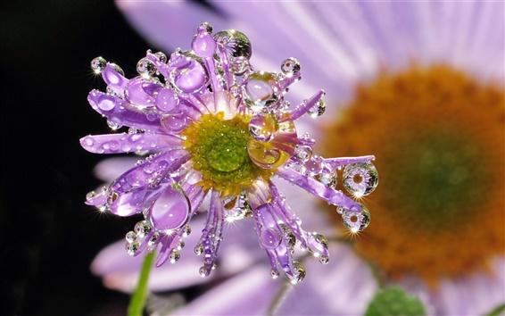 Wallpaper Flower dew drops