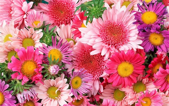 Wallpaper Flowers colorful beautiful dream