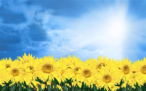 Обои Золотой подсолнух под голубым небом
