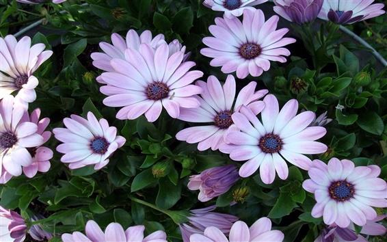 Fondos de pantalla Luz flores de color púrpura en todas partes
