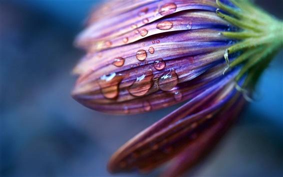 Fond d'écran Fleur pourpre avec des gouttelettes d'eau