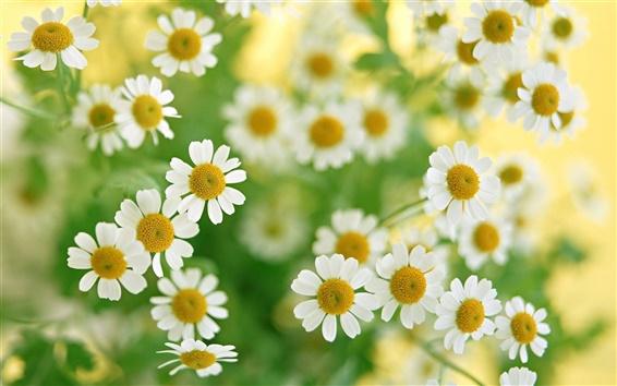 Papéis de Parede Romântica flores silvestres