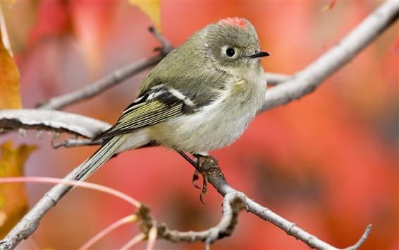Papéis de Parede Sparrow close-up