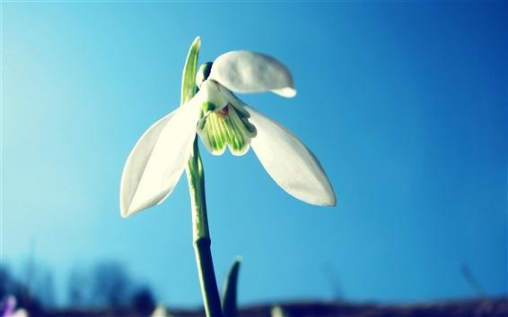 Papéis de Parede Três pétalas da flor branca