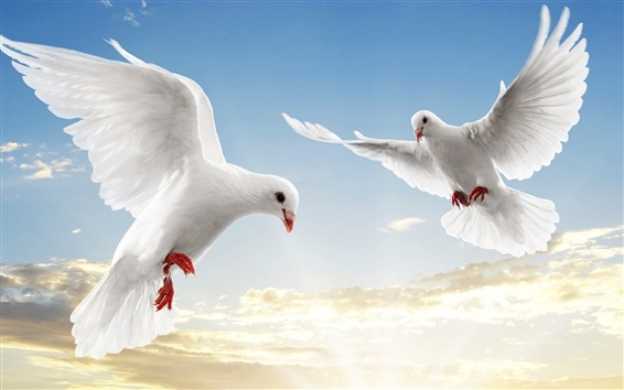 Wallpaper White doves soar sky