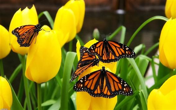 Обои Желтые тюльпаны и бабочки