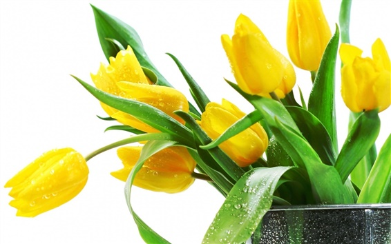 Wallpaper Beautiful yellow tulips flowers