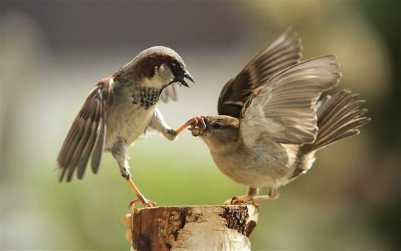 Wallpaper Birds of war