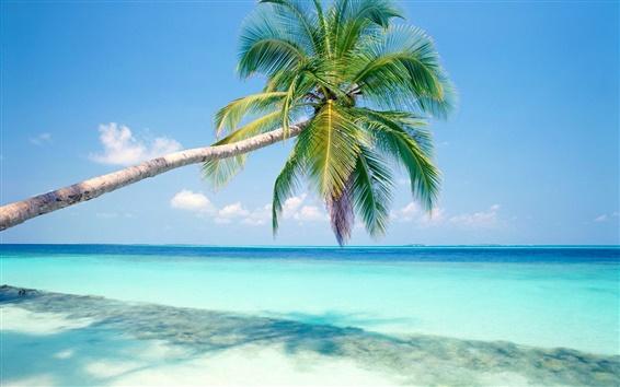 Papéis de Parede Azul praia um coqueiro