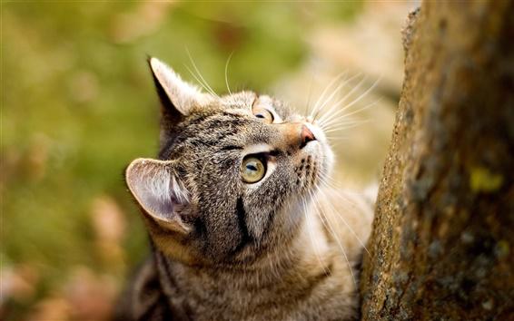 Wallpaper Cat staring at the tree
