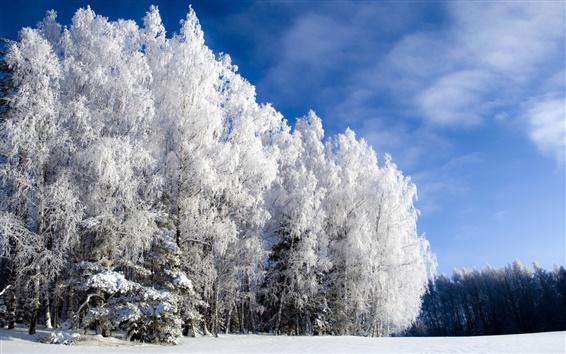 배경 화면 추운 겨울 나무