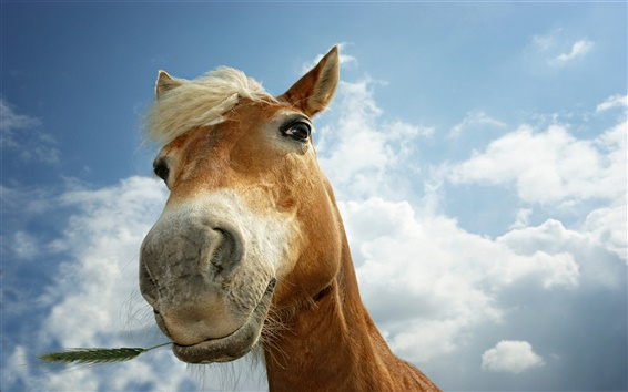 Papéis de Parede cavalo curioso