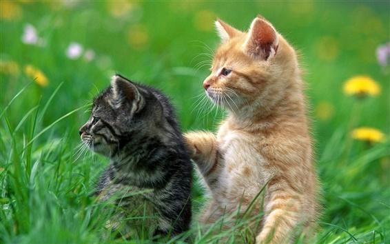 Fond d'écran Mignon chat noir et le chat jaune