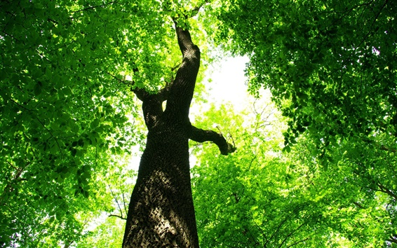 Papéis de Parede Floresta folhas verdes sob o sol