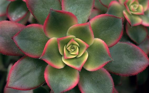 Fond d'écran Pétales de fleurs vert
