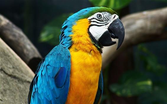 Papéis de Parede Parrot linda