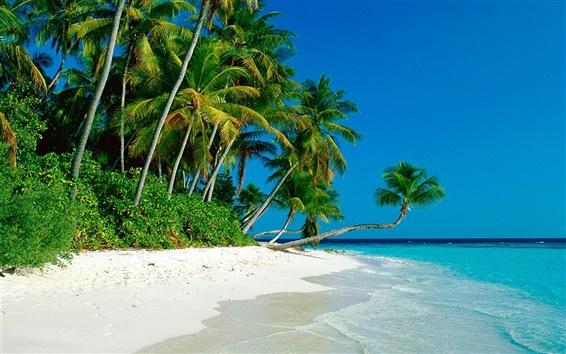 Fond d'écran Palm beach bois